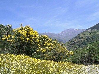 Foto von blühender Bergwiese in der Berglandschaft der Sierra Nevada