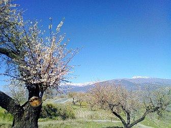 Foto von Landschaft mit Mandelblüte