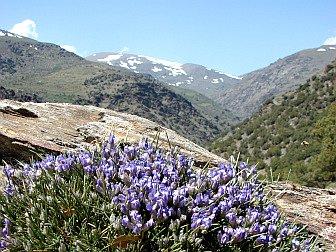 Berglandschaft der Sierre Nevada