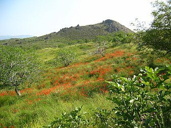 Foto von blühender Bergwiese im Frühling