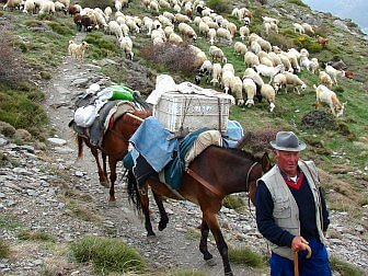 Photo of Sheppard with horse and sheep in the mountains of Sierra Nevada